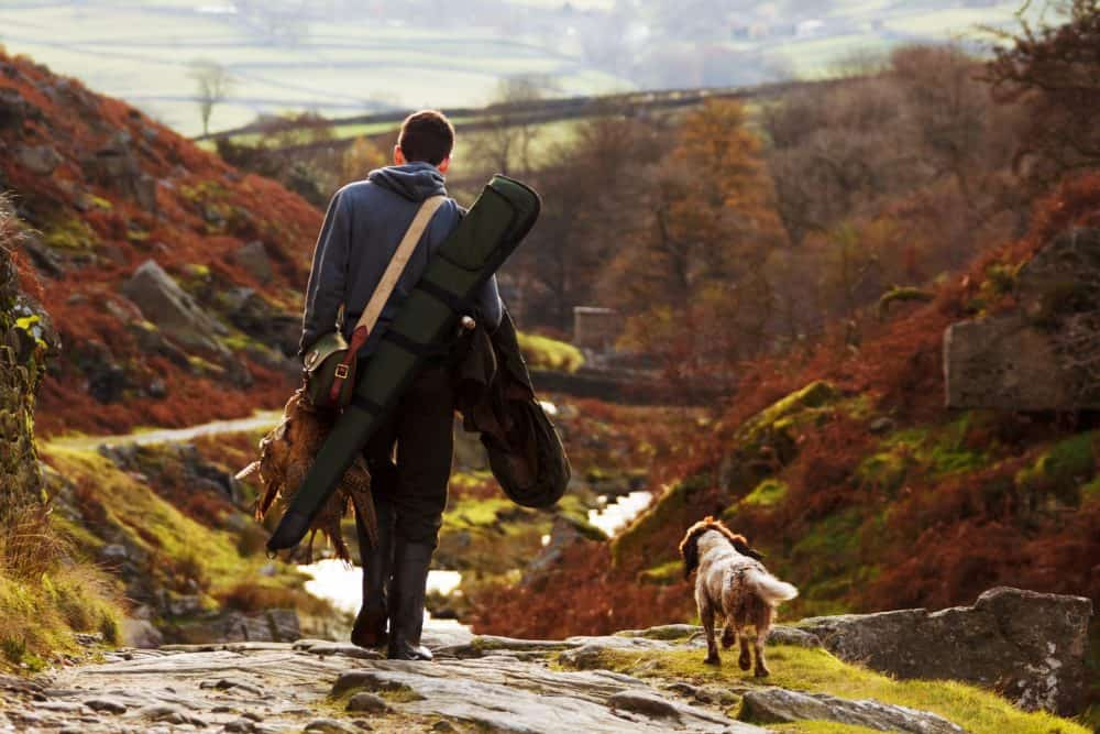15 Great Hunting Dogs (+5 Hunting Dog Breeds that Don't Shed)