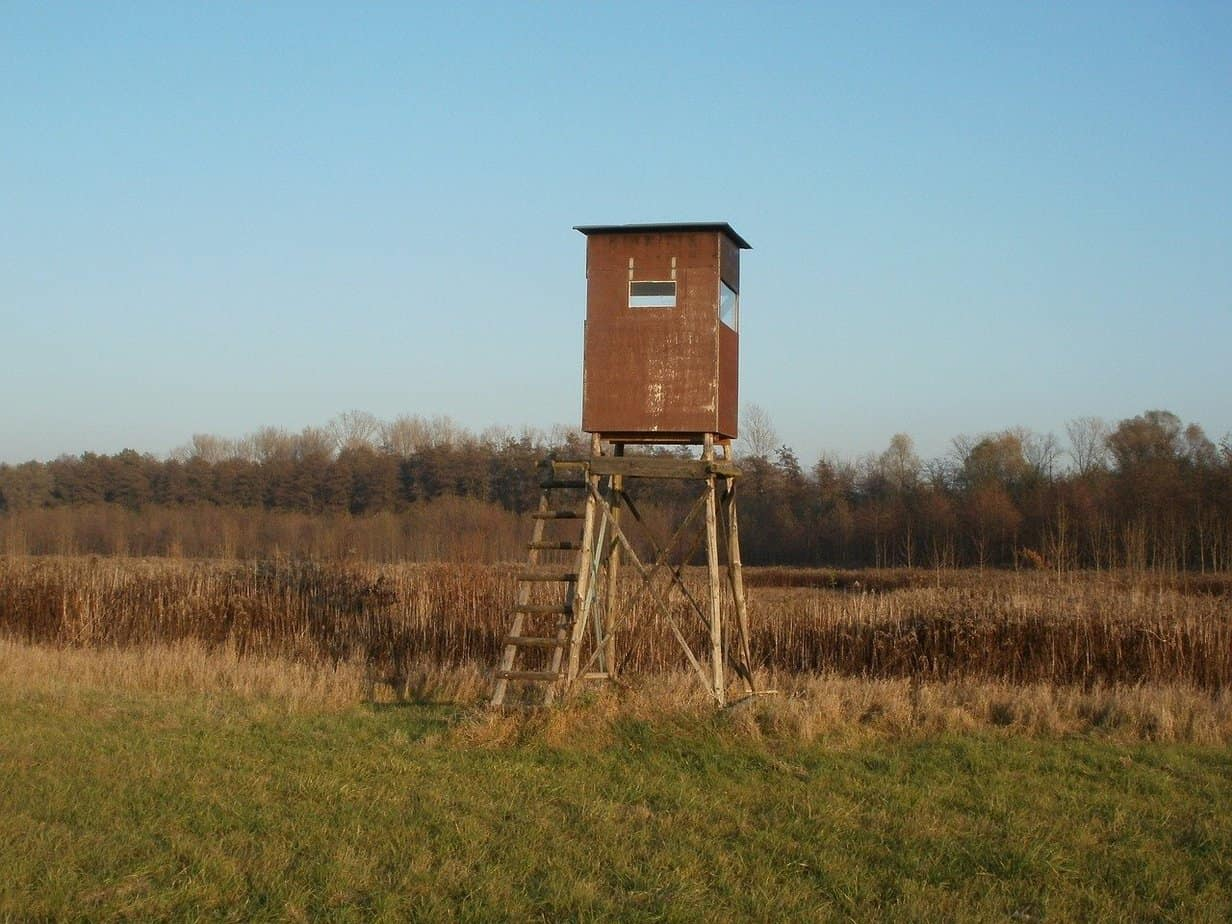 Everything You Need to Know About Bow Hunting Stands How High, How to Aim, and More