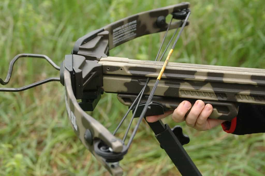 How to Choose Your Crossbow Hunting Arrows