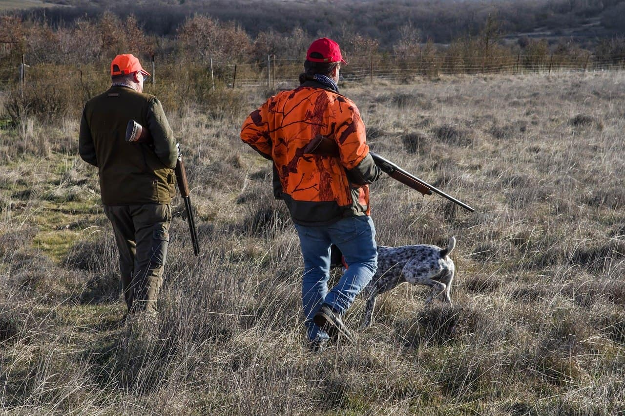 How to Train Your Dog to Be a Hunting Dog