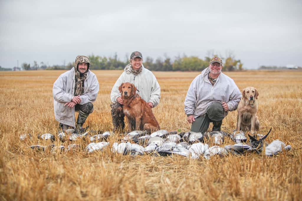 Snow Geese Hunting Without Decoys 8 Tips for Getting Geese Without Help
