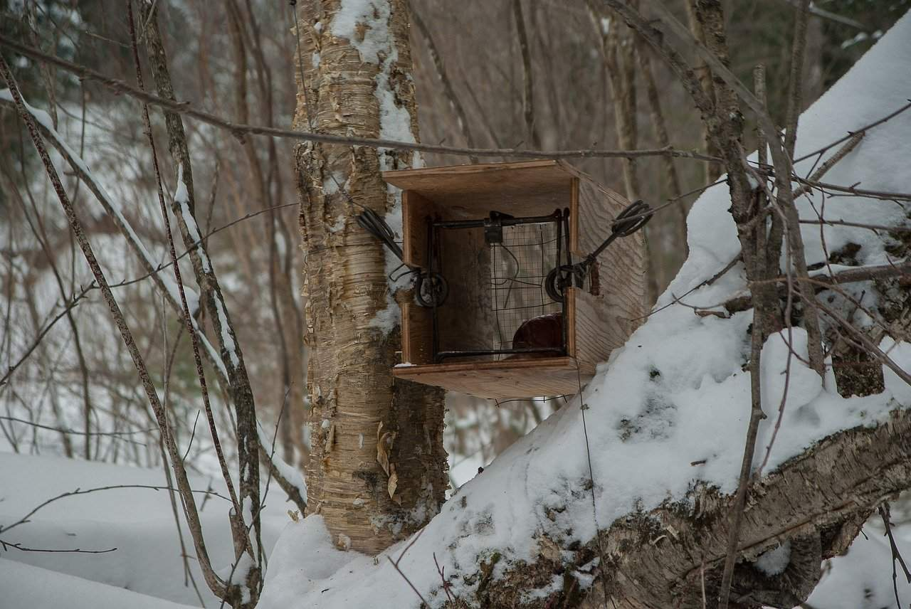 Trapping The Ultimate Guide to All the Types of Hunting Traps