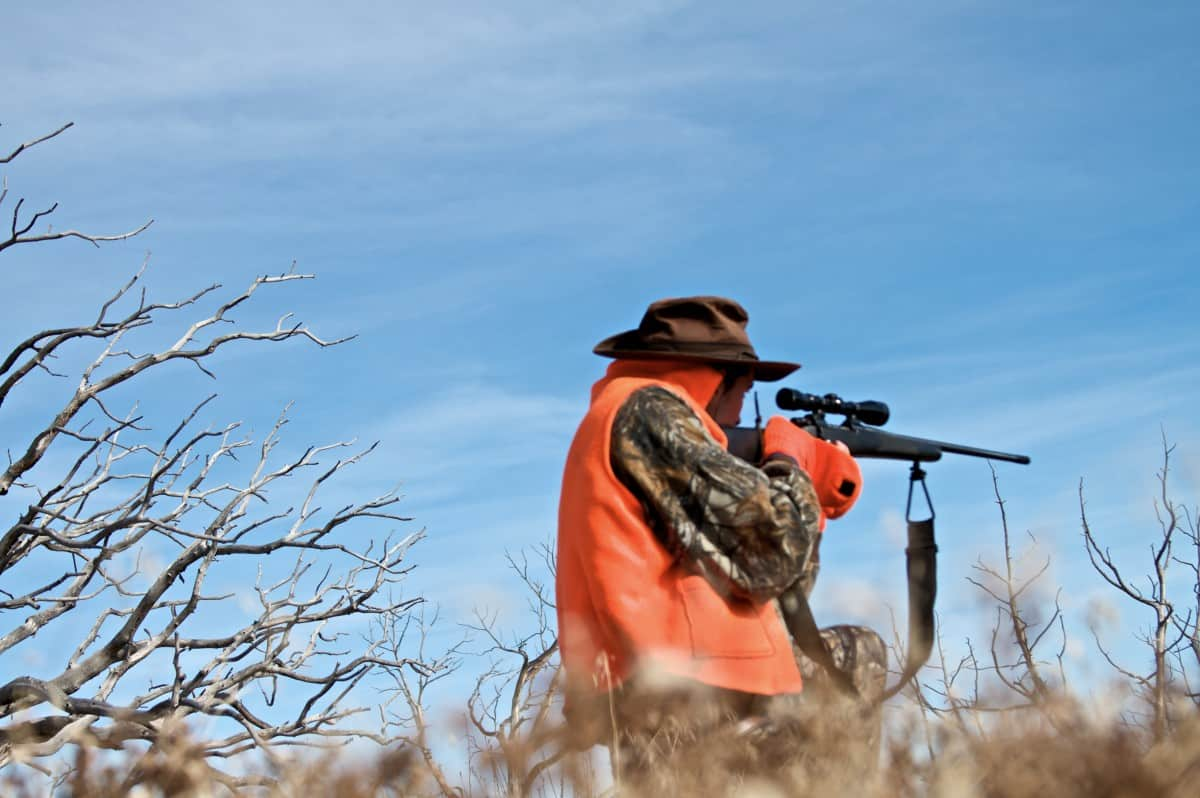 12 Proven Dove Hunting Tips